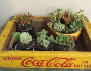 These succulent planters; along with quite a few vintage crates