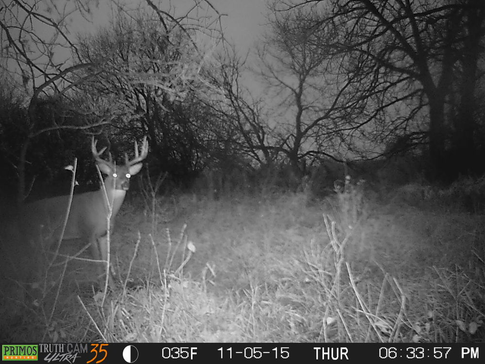 A buck that I will be after the first week of November if I still have a tag in hand.