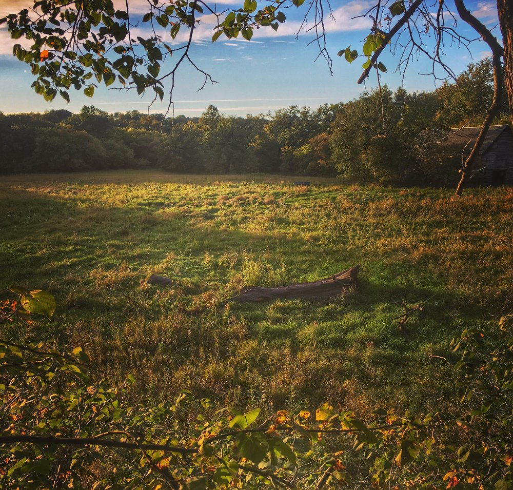 The small field on the private land I'm hoping one of the bucks will be travelling through.