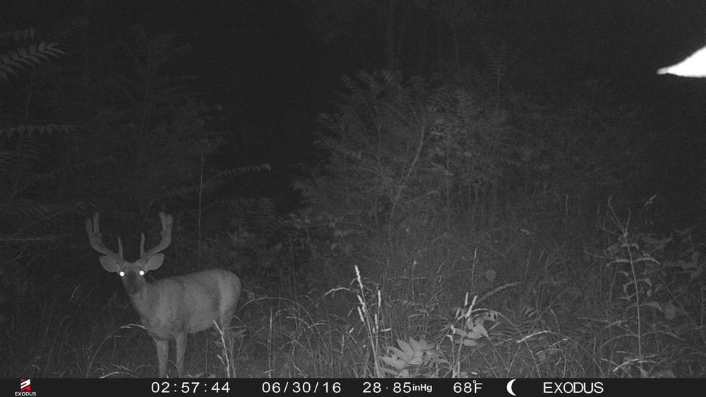 exodus-trail-camera