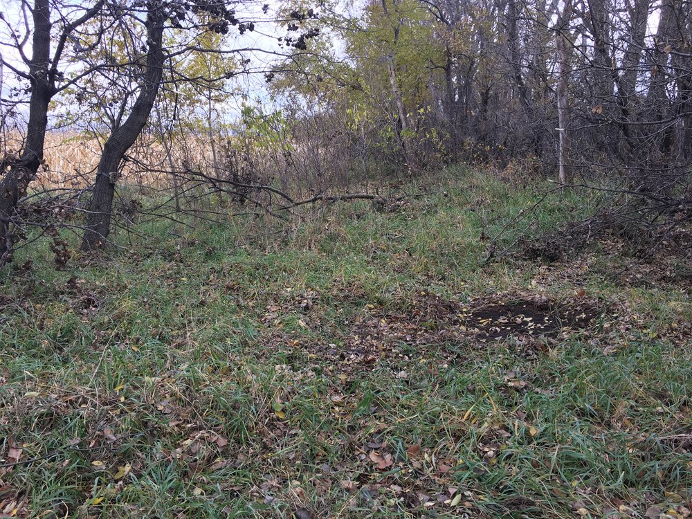 A scrape is a great way to get an inventory of bucks using an overlooked piece of public land.