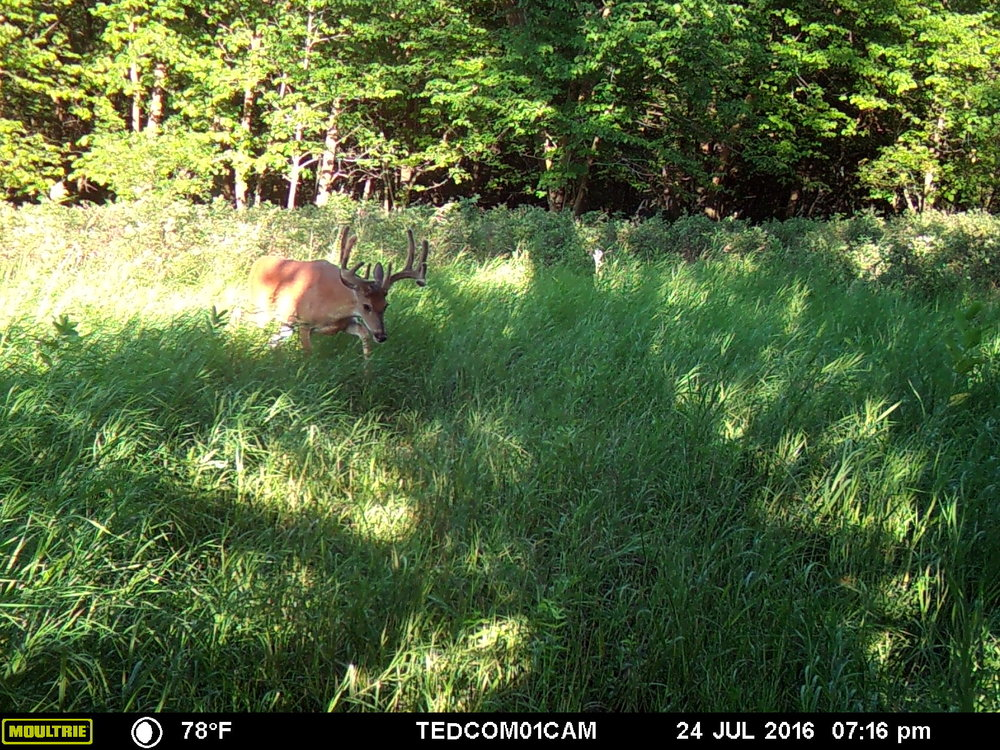 Kobe in 2016   Looking to read more about trail cameras? Check out the links below.      4 Tips for Improving Your Trail Camera Pictures      3 Reasons You Shouldn't Rely on Trail Cameras