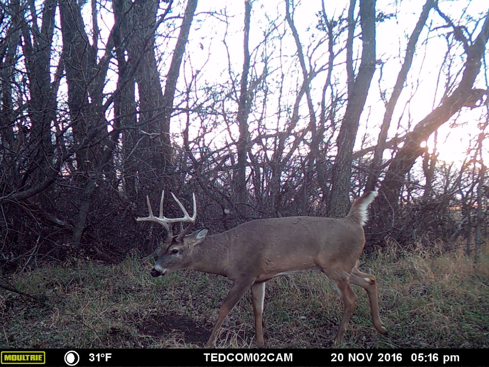 Want to read more about hunting specific buck? Read  The Pros and Cons of Hunting a Specific Buck