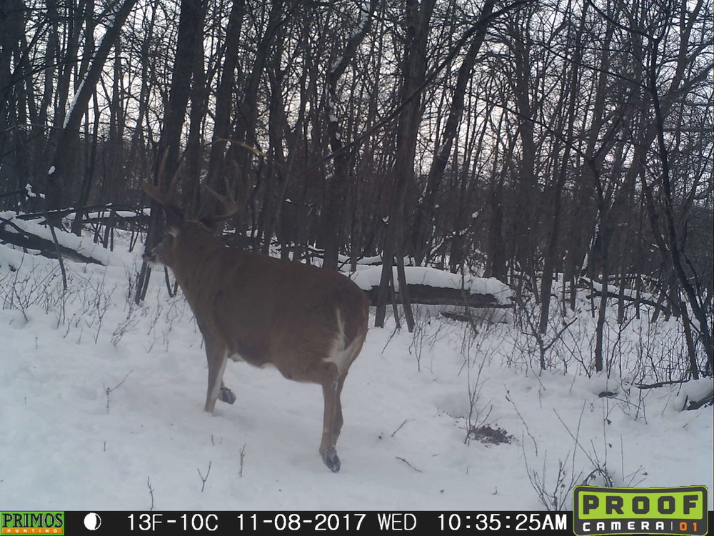 After reviewing my sub-par footage, I'm about 90% confident this was the buck I saw that morning.