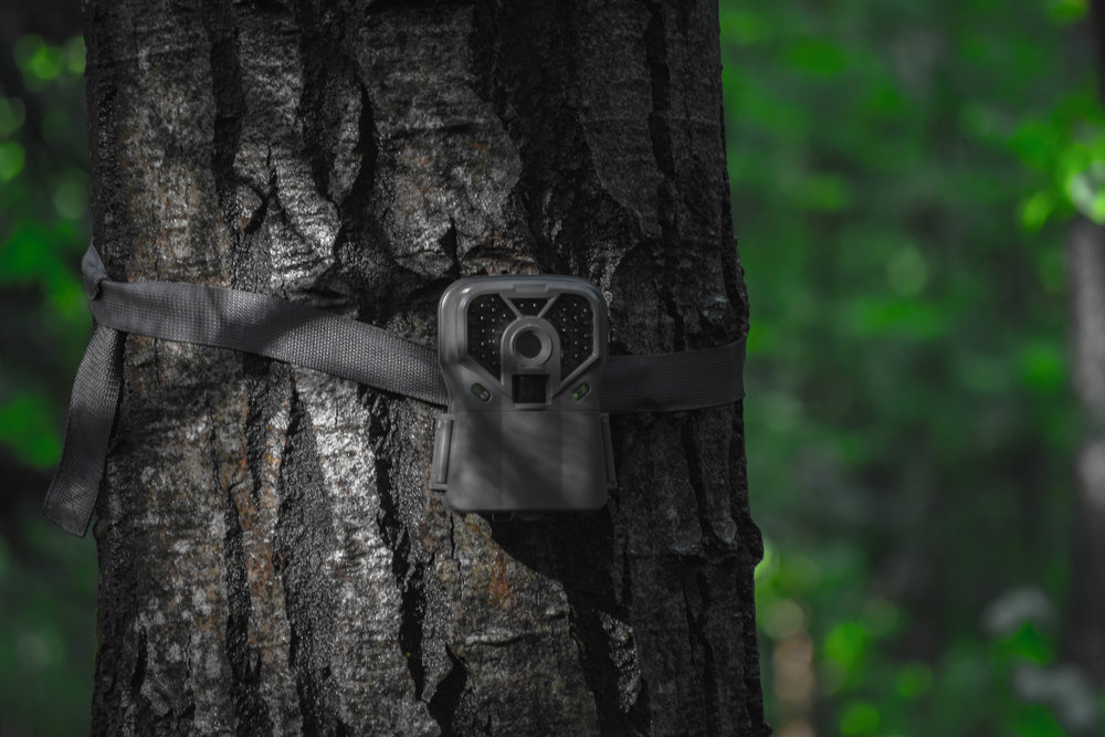 Depending on when you are planning to hunt an area, your summer trail camera strategy can change drastically.