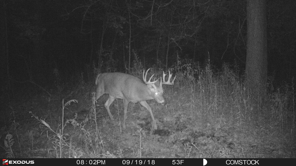 This buck had been showing up almost nightly within an hour of legal shooting light in the evening.