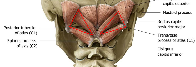 suboccipital triange.png
