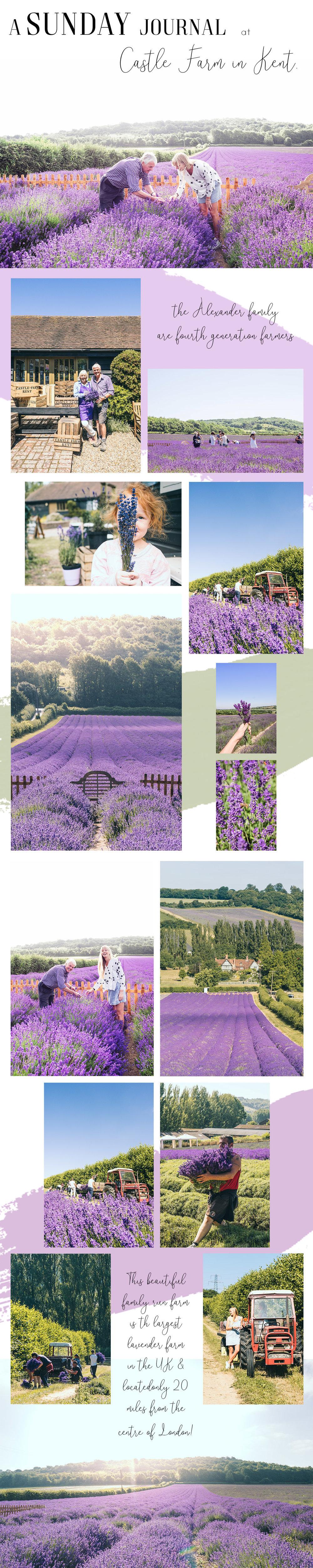 Castle Farm.jpg