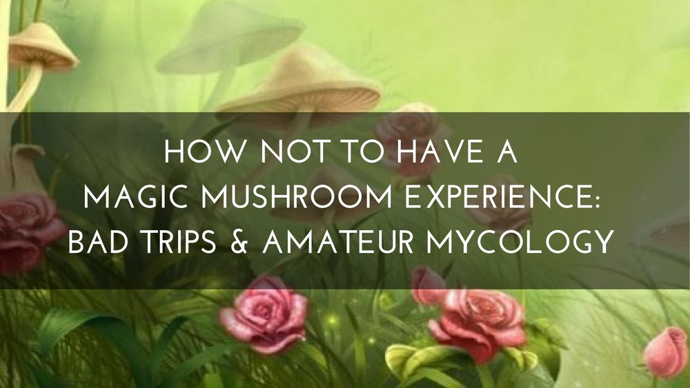 How NOT to Have a Magic Mushroom Experience: Bad Trips & Amateur Mycology