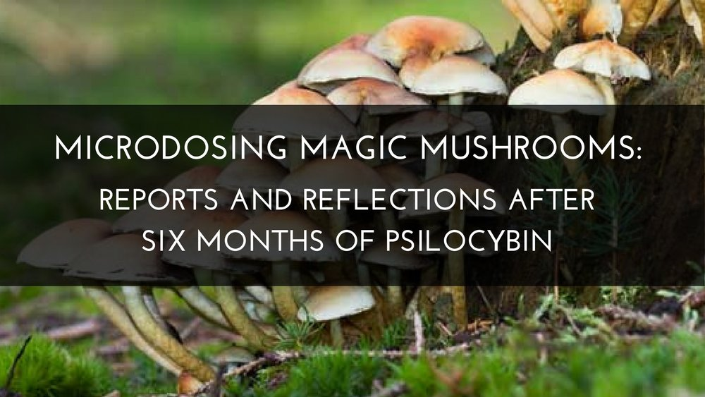 Microdosing magic mushrooms reports and reflections after six months of psilocybin