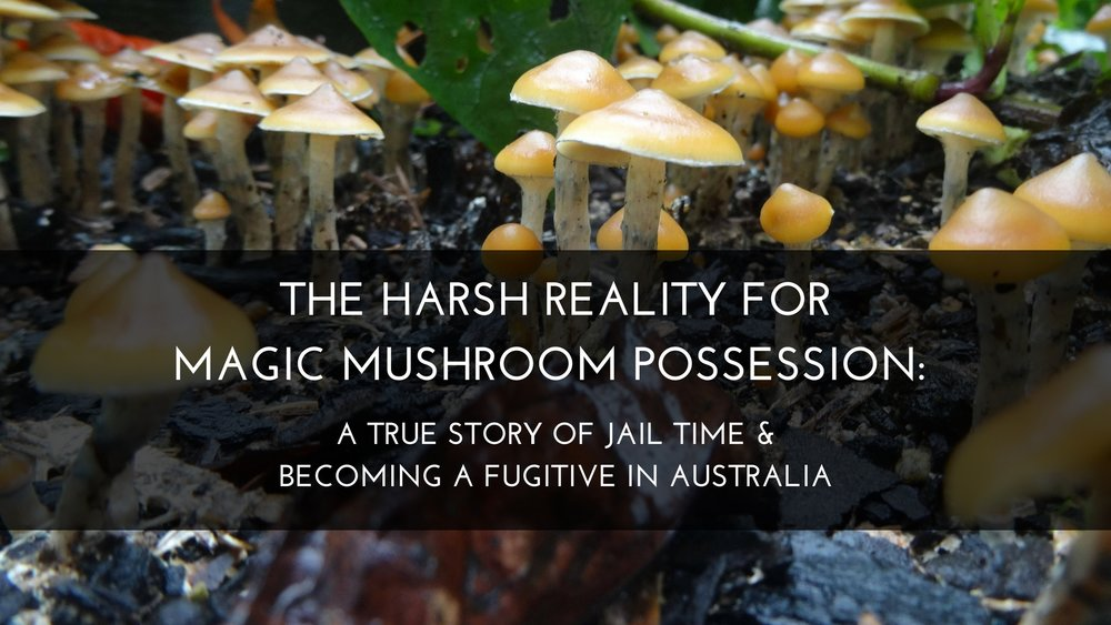 The harsh reality for magic mushroom possession