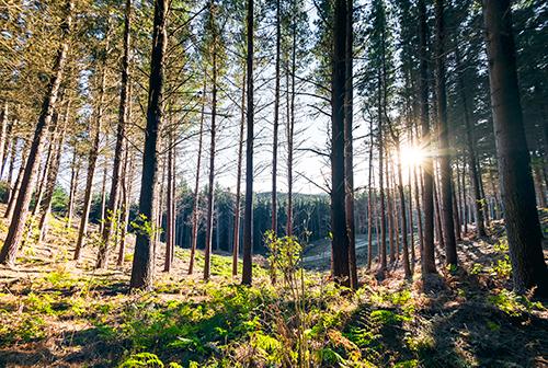 ForestEnterprises2_18.jpg