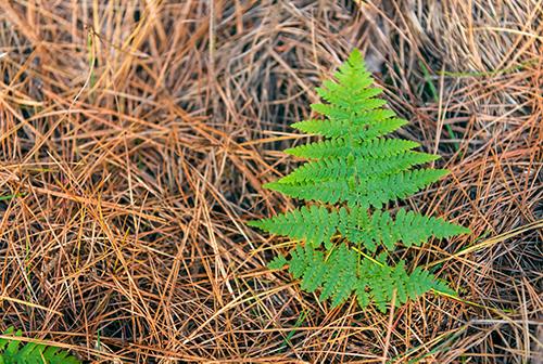 ForestEnterprises2_21.jpg