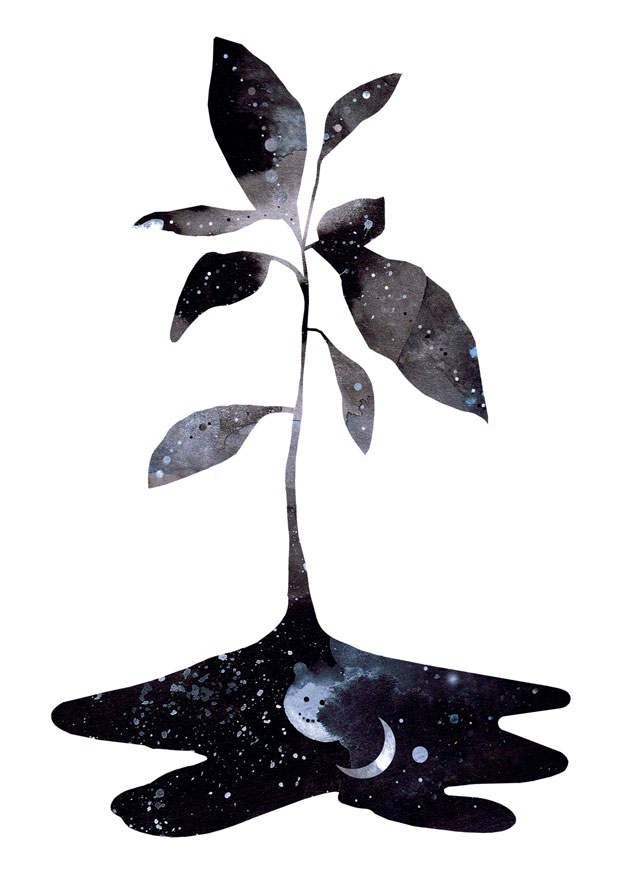 plant-web.jpg