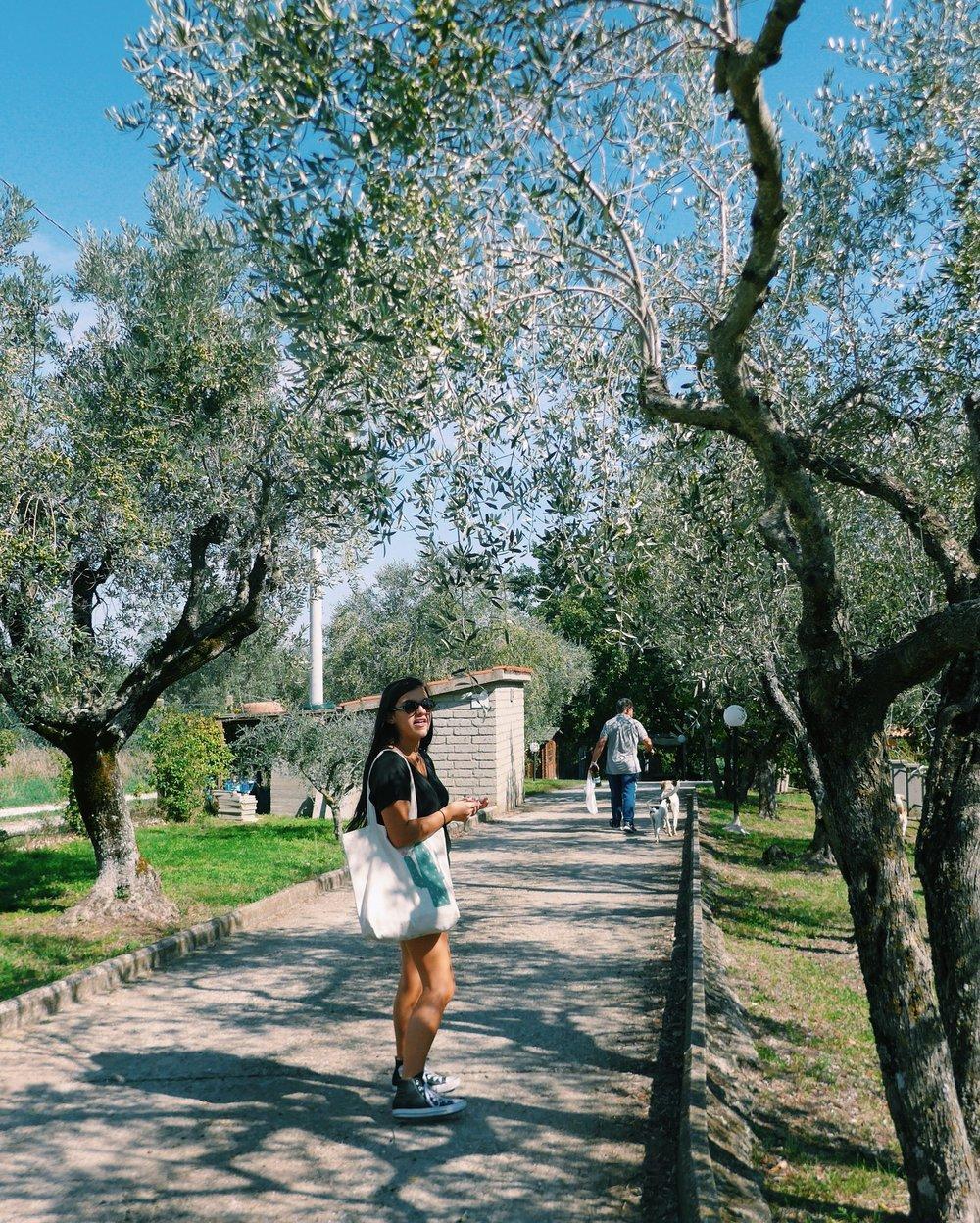 Viterbo Italy Travel
