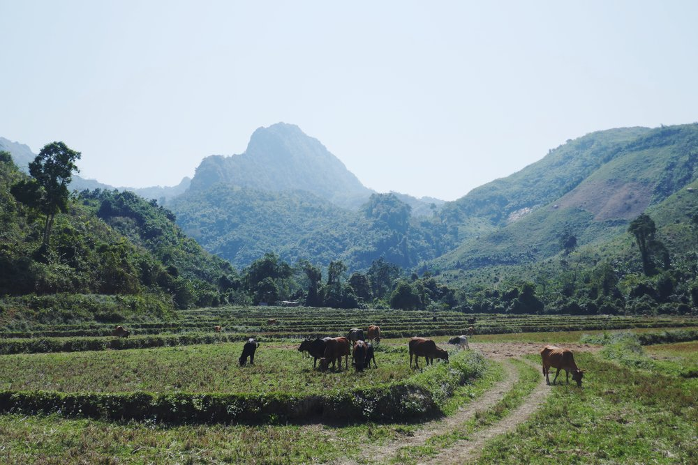 Northern Laos Travel Blog
