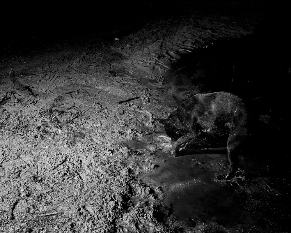 Moon Mud , 2013 Archival pigment print mounted to rag board 19 x 23.75 in (48.26 x 60.33 cm)