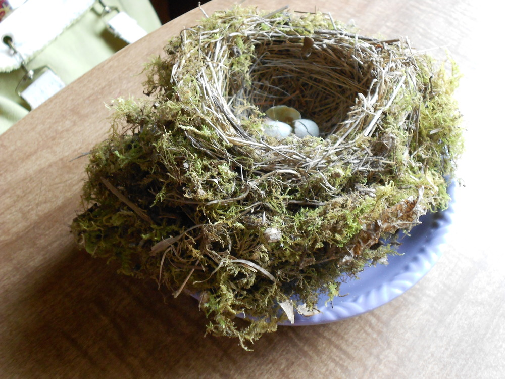 A beautiful nest we cleaned out of a bluebird box to prepare it for new occupants. See the eggs leftover from the previous year? Probably some that didn't hatch & were eventually scavenged.