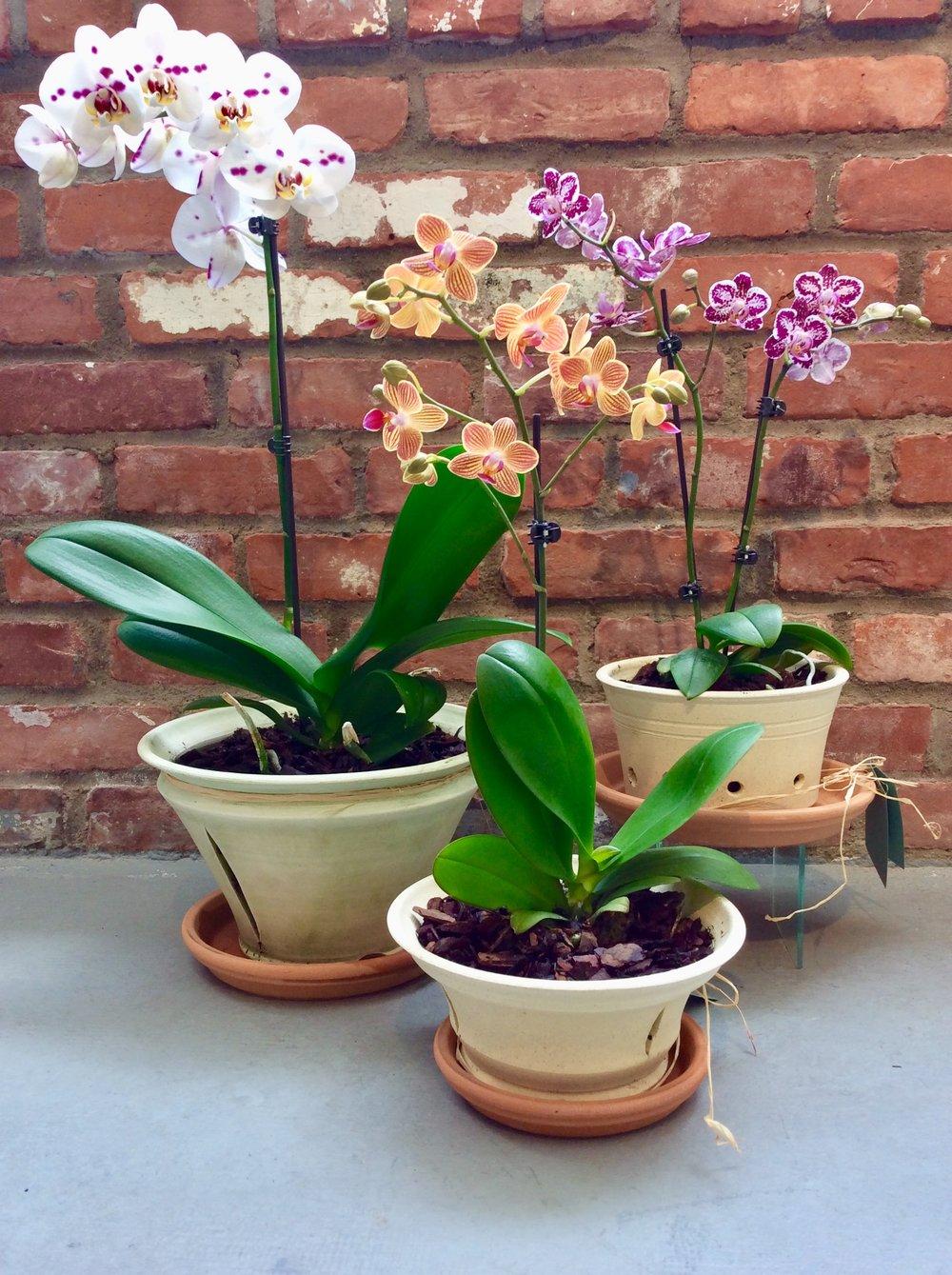 OrchidPotsatRachelKDeLongGallery