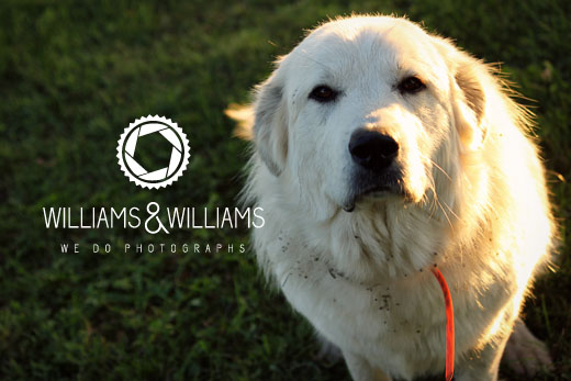 Williams & Williams Photography | We Do Photographs