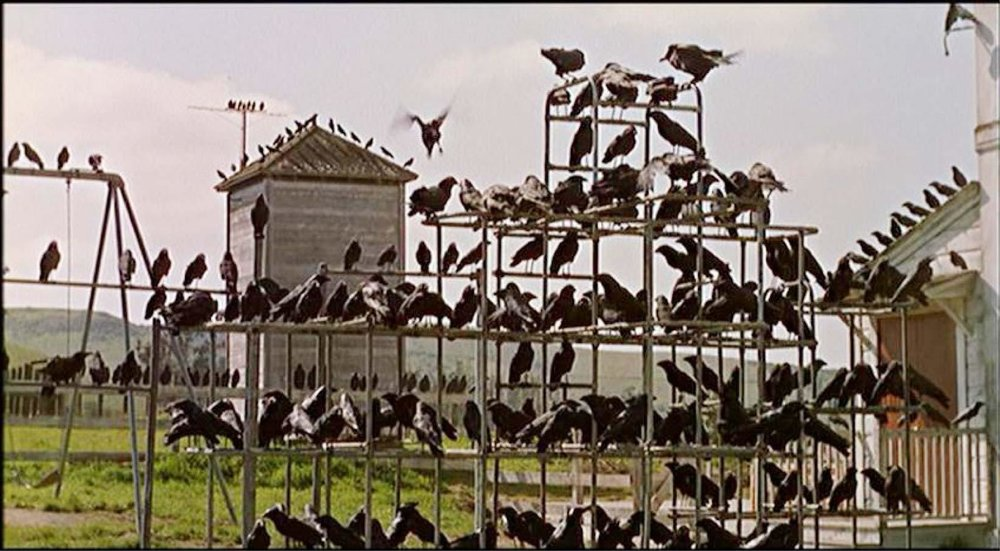 =47. The Birds