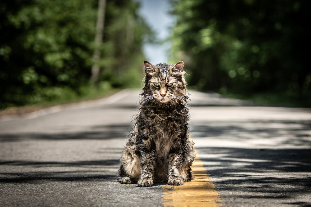 Four different kitties play Church, the feline lead of  Pet Sematary