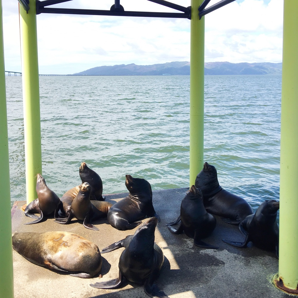 Some of Astoria's resident sea lions.