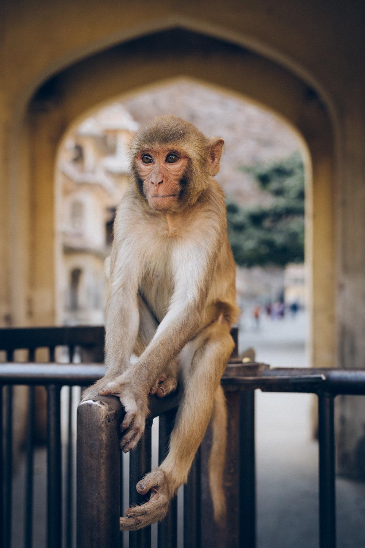 Monkey king.jpg