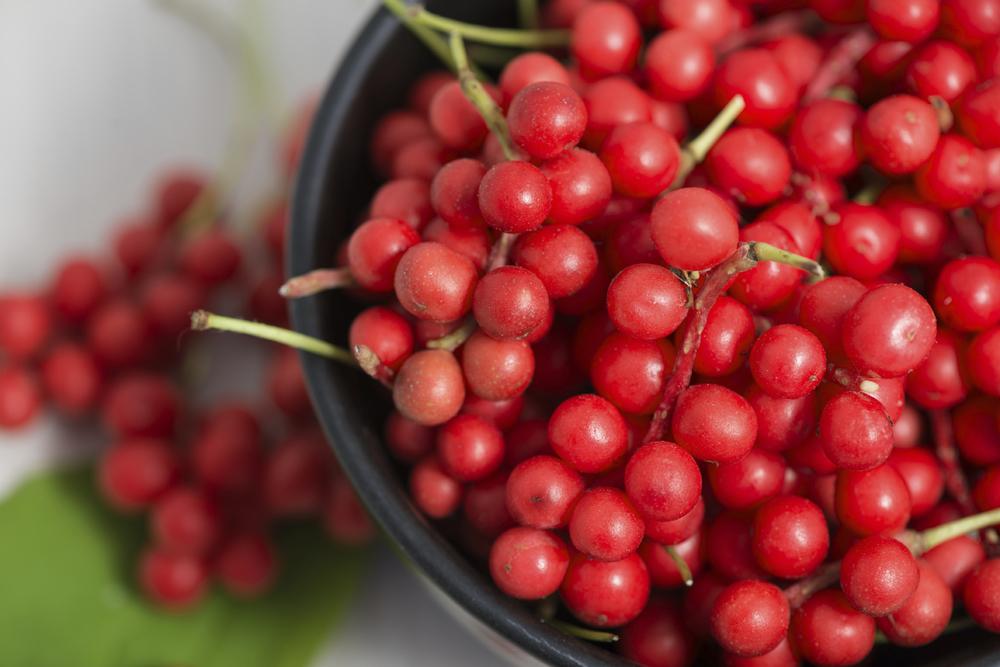 Schizandra berries.