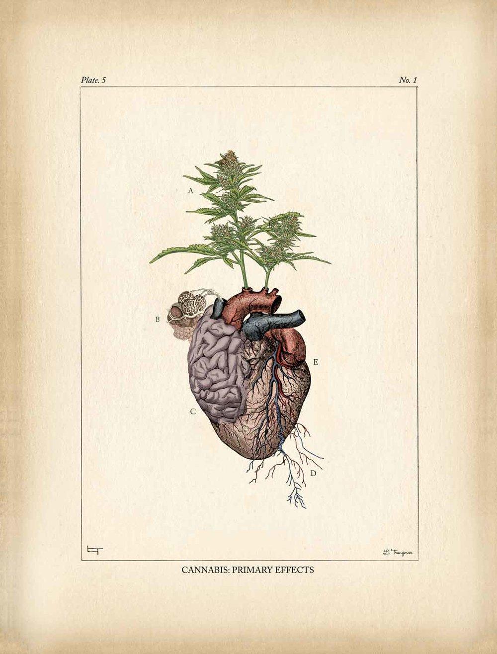 AG_heart2.jpg