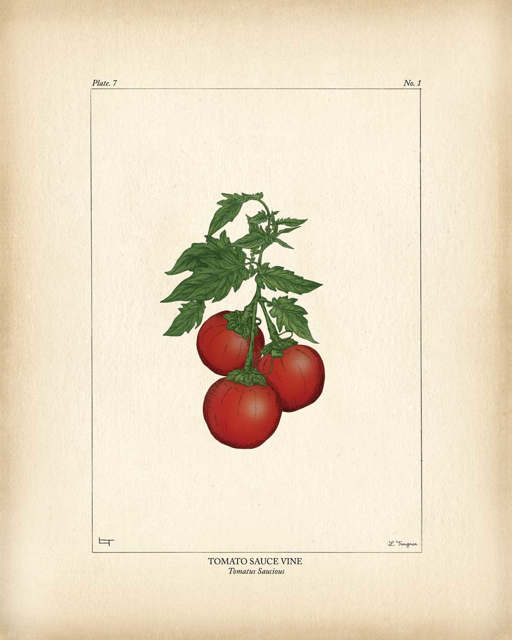 Tomato Sauce Vine