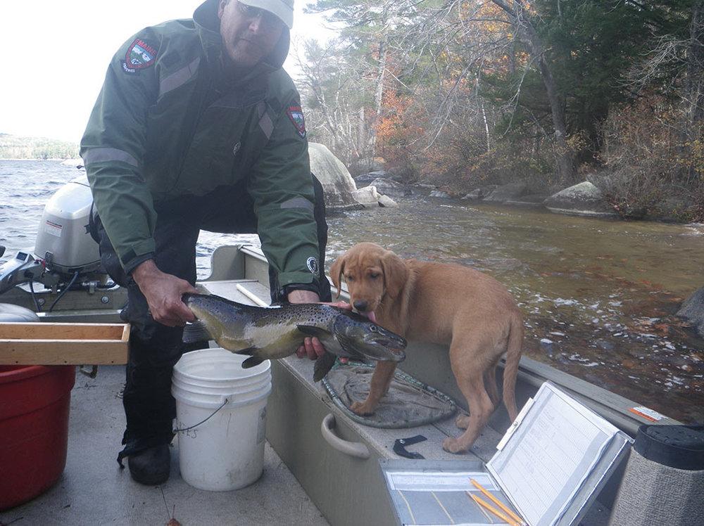 iowa-red-labs-hunting-dogs-happy-customers-jim-2.jpg