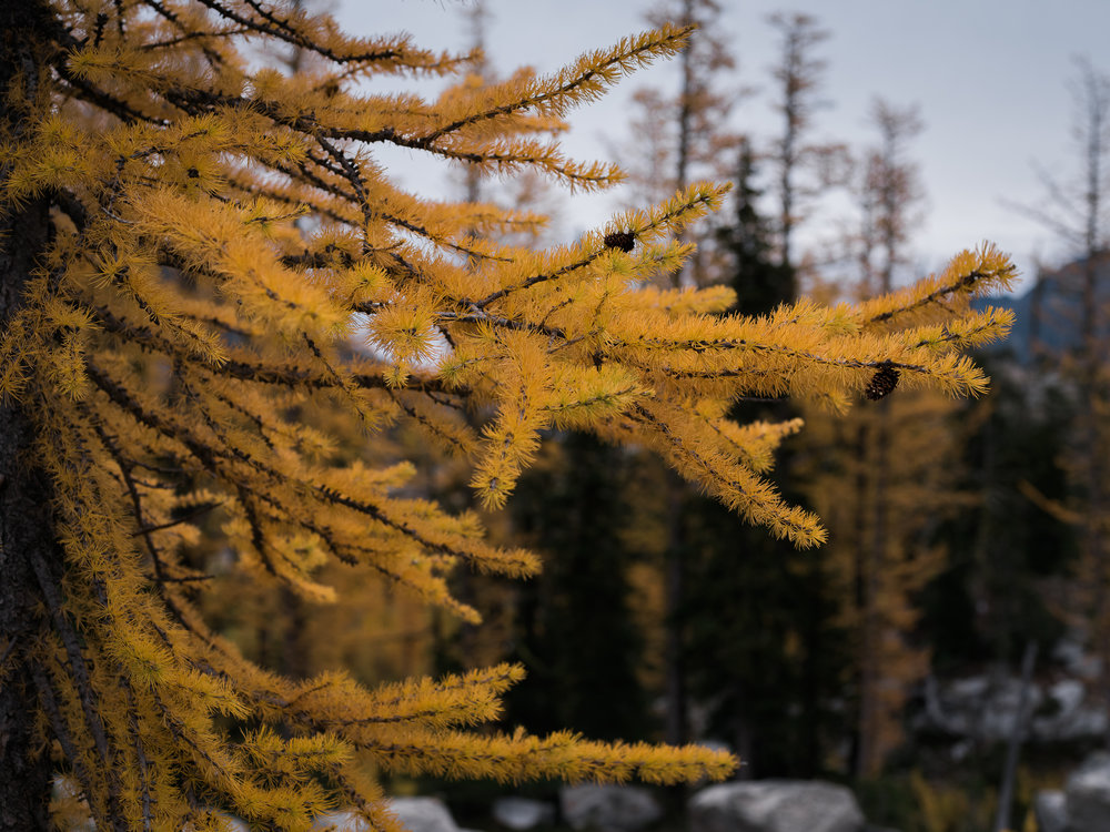 _LFH7304_Enchantments.jpg