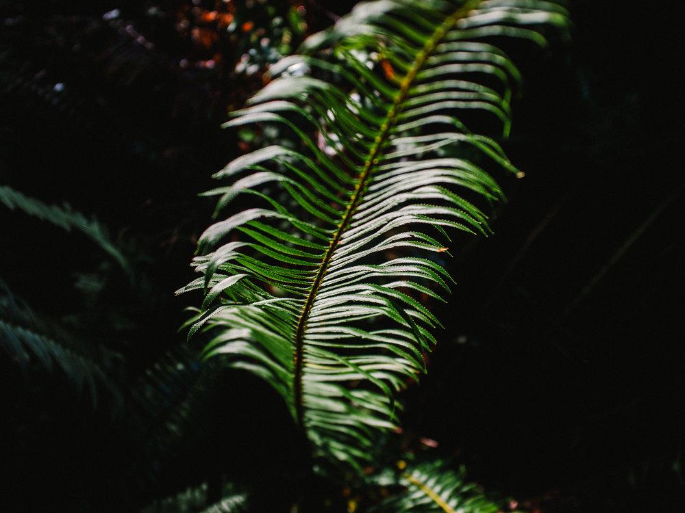 DSCF1586_Redwoods.jpg