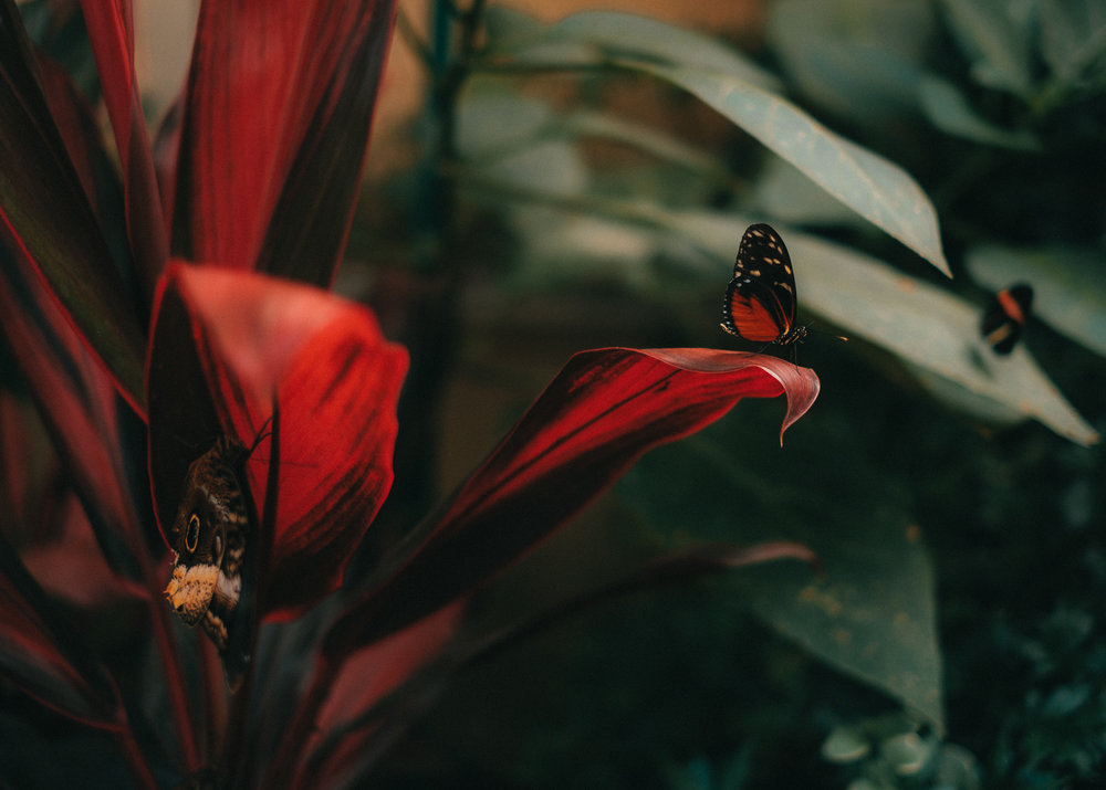 DSCF3898_Butterflies.jpg