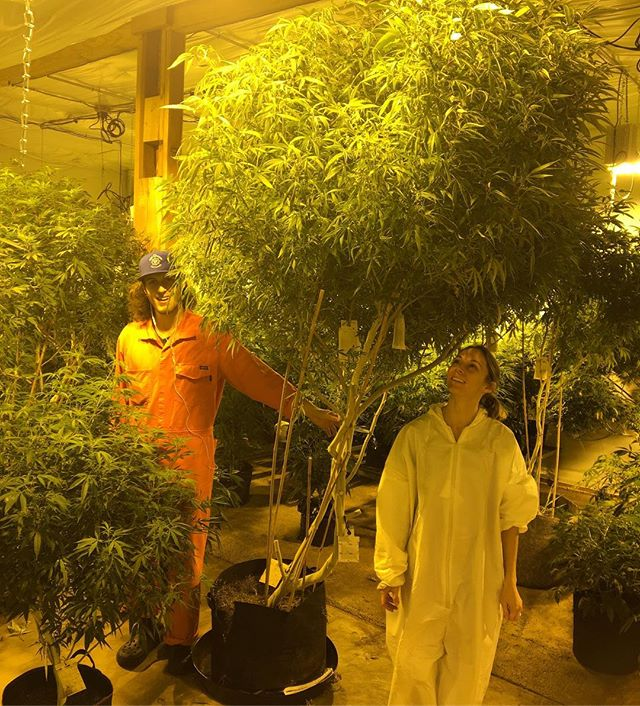 Venessa and Noah enjoying the shade of the mothers while takin ✂cuts for the next sog🌲🌲🌲. #highnoon #plantbasedcannabis #plantbased #veganic #giants #indoorgarden #mothers #ommp #hightimes #i502 #4:20 #7:10 #503 #portland #nosynthetics #seaofgreen #dope #cannabis #weedfam