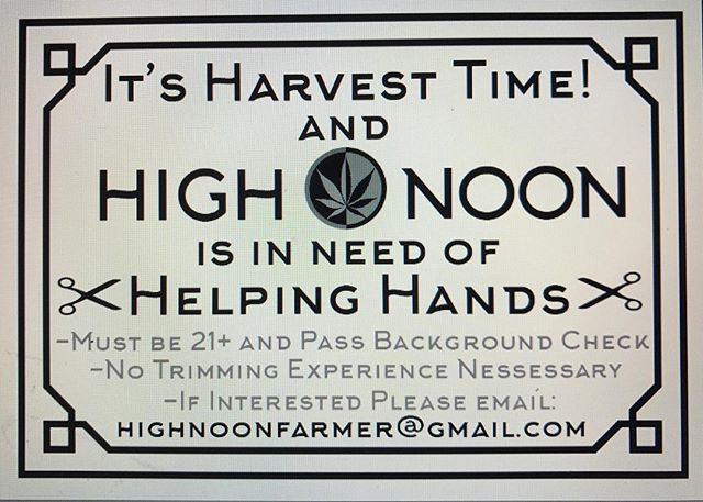 We are need of hard working people to fill trimming and garden jobs. If interested email: highnoonfarmer@gmail.com.  #trimmerswanted #highnoon #plantbasedhorticulture #olcclicensed #cannabis #nuglife #4:20 #7:10 #jobs #oregon #ommp #502 #organic