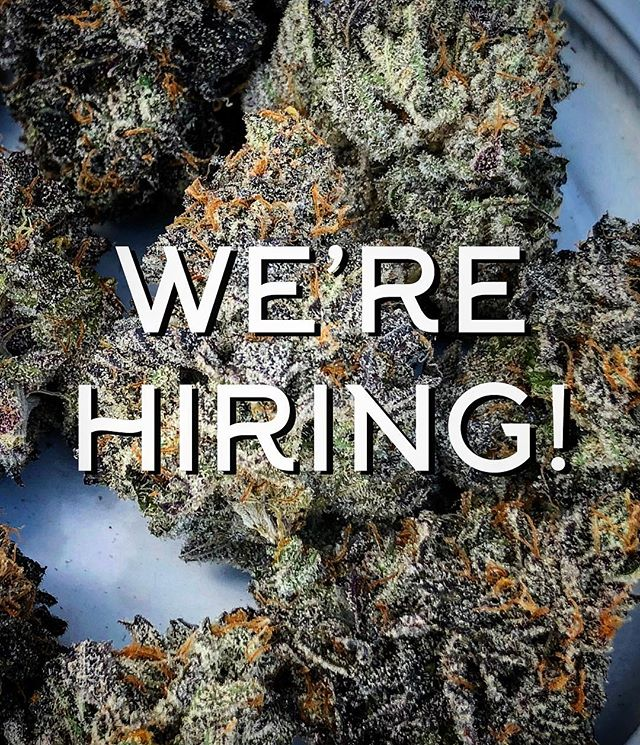 Greetings loyal quality cult followers! Do you have interest in learning how to grow organic craft cannabis in Oregon, and gain experience working with our exclusive and rare boutique genetics? We are looking for a highly motivated individual that takes initiative and is eager to learn to join our team as a paid apprentice.  The position will start as part-time (~3 days a week) with potential to move to full time for the right candidate. No cannabis experience necessary- just a valid Oregon Cannabis Handler Permit, good vibes, positive attitude, and a willingness to work!  To those seriously interested, please submit a Cover Letter (include why you believe you'd be a good fit for High Noon, and what your other passions are) & Resume (work history for the last 5 years) to info@high-noon.org. Important to note: We are located in Molalla, OR - about a 50 minute drive from Portland Proper. Reliable transportation and willingness to commute are a must.  Thank you and we look forward to hearing from you! #jointhequalitycult