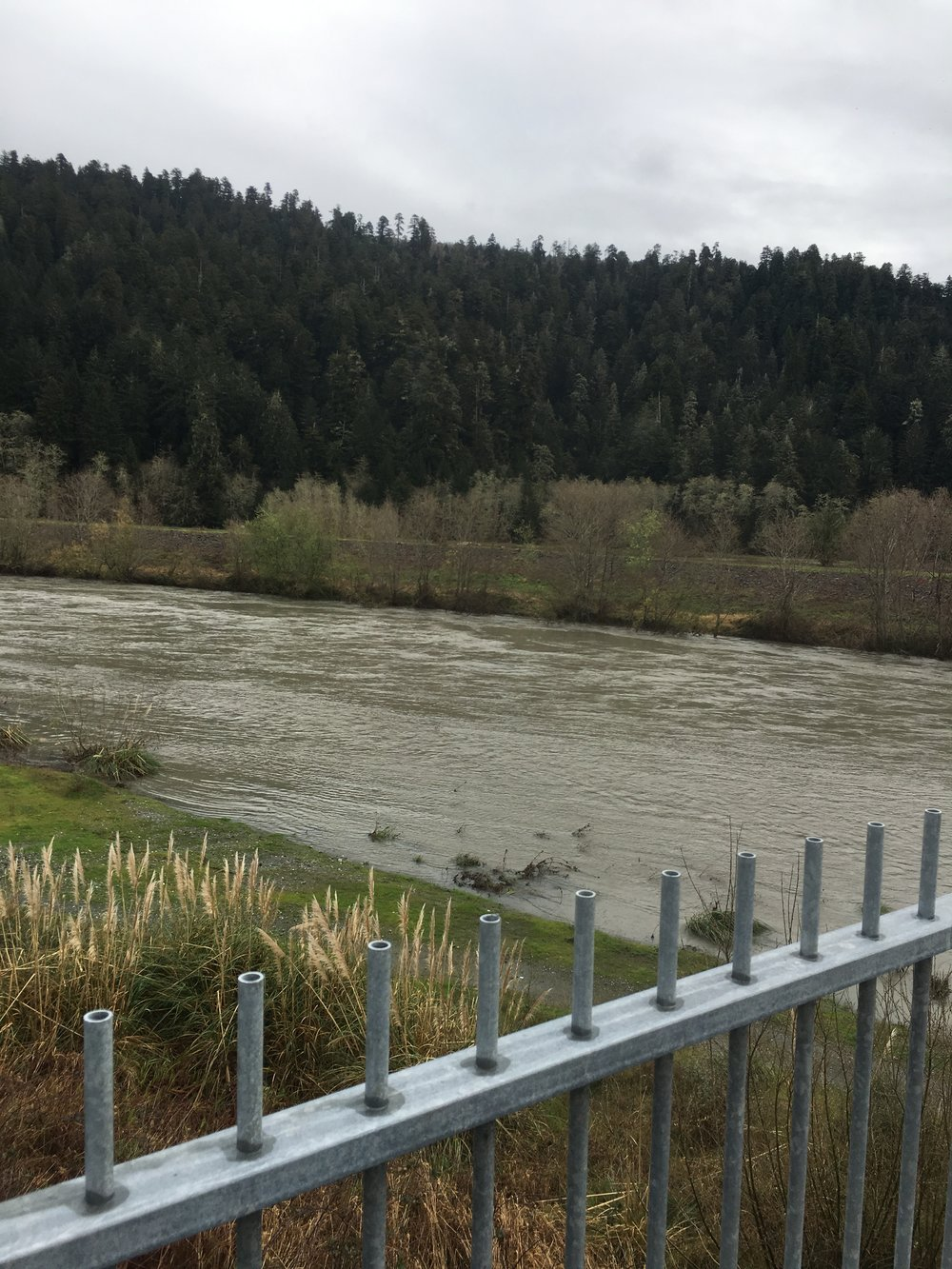 Pictured is Redwood Creek in Orik, Ca on February 10, 2017. Picture was taken by Mike Rasmussen of SalmonSacRiver.com.