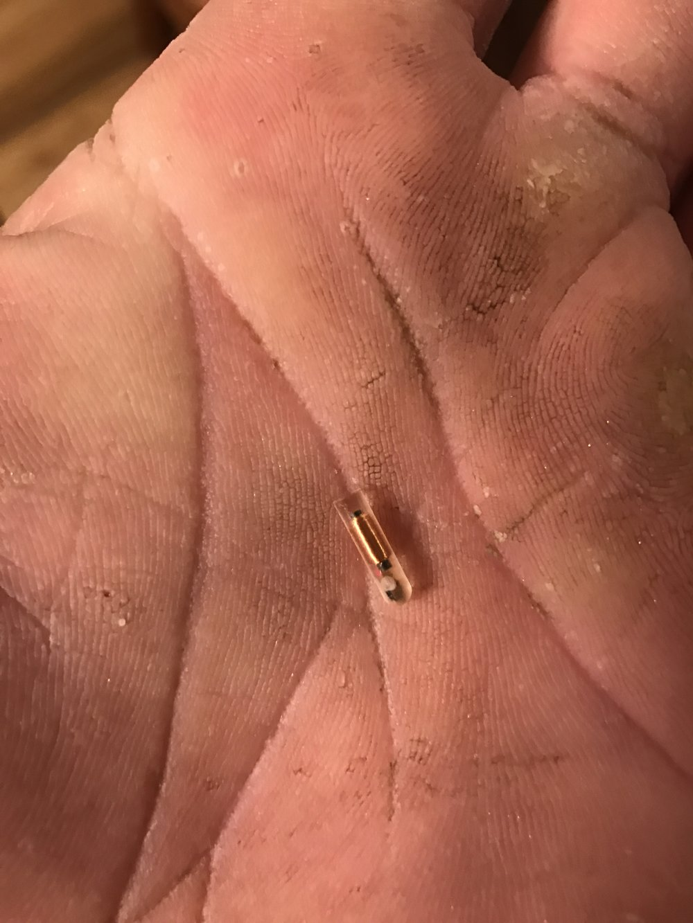 This image is of a micro chip that was inserted as protocol by Coleman National Fish Hatchery and recovered by local fishing guide Mike Rasmussen while processing a hatchery steelhead caught by Kevin Barnes (pictured above with the Sacramento River Steelhead). Biologist with the DFG collected the valuable information from this chip for their research in the life cycle of Sacramento River Steelhead. Doing their part to better understand and manage the steelhead fishery here on the Sacramento River.