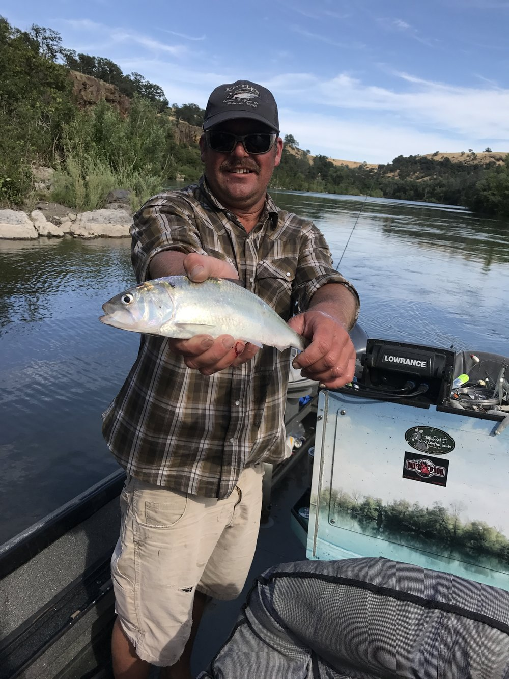 Mike Rasmussen with  SalmonSacRiver.com  holds a male American Shad he caught at a creek mouth on the Sacramento River on June 5, 2017 while fishing a red 1/16 oz jig head with a  Chartreuse Mr. Twister grub.