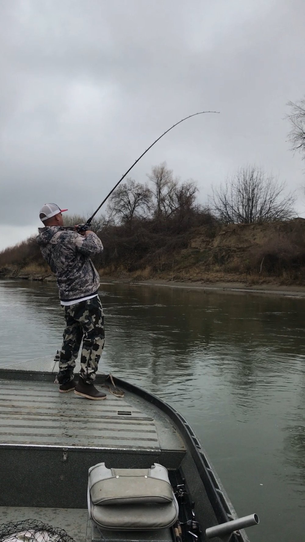 Sacramento River 20 pound striped bass double hook up with client Eric Robison from Las Vegas, NV on January 6, 2018. Fishing guide Mike Rasmussen takes a pic after landing his half of the double header. Mike's fish can be seen laying in the net at the bottom of the photo.