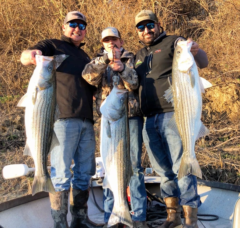 Chris Tocatlian and company hold up a rare trio of mid 20 pound striped bass they landed and released after their triple hook-up on March 5, 2018 on the Sacramento River.