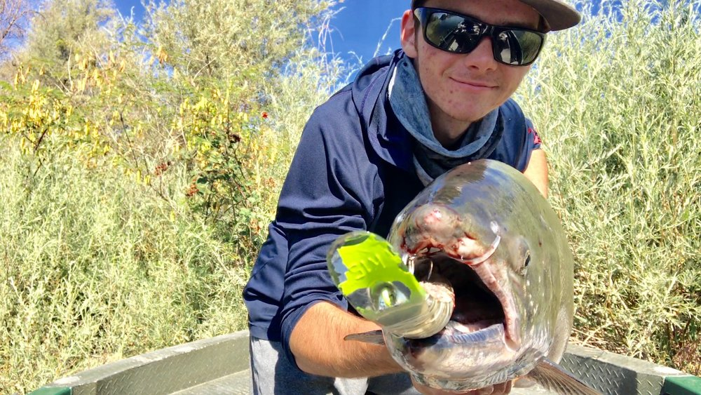 Ryan Tripp from Oroville, Ca holds up a Feather River king salmon he caught using the k16 kwikfish stuffed in the mouth of the salmon pictured. The Feather River is starting to load up with newly arriving kings.