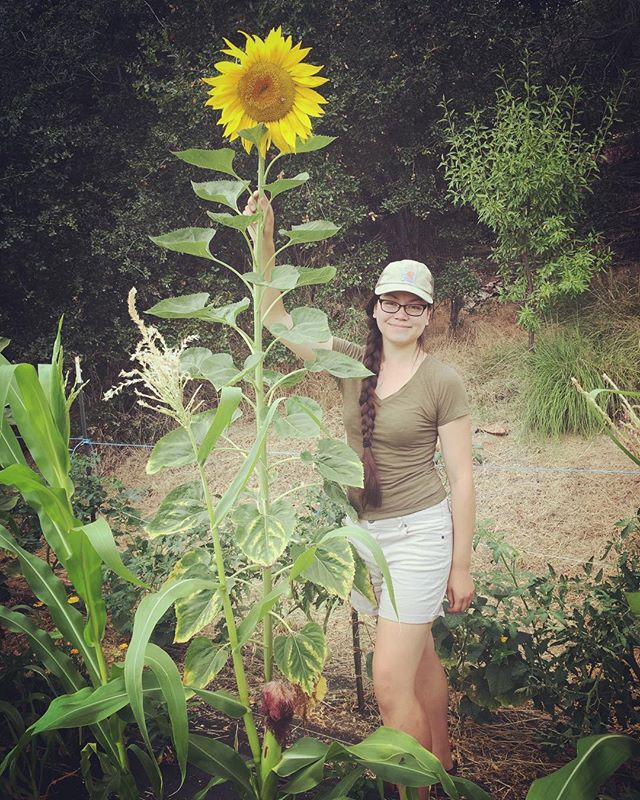 "We're loving seeing everyone's sunflower pics. Mammoth sunflowers are our favorites because, well, they're mammoths! (For scale, I'm 5'9""-ish)"