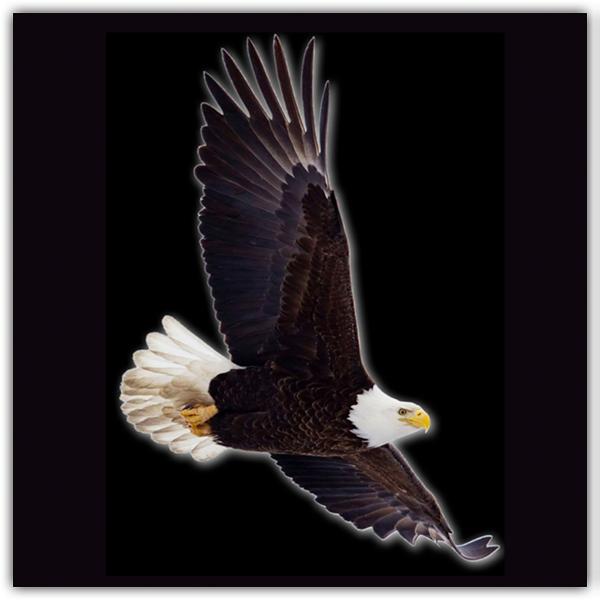 Eagle 600.JPG