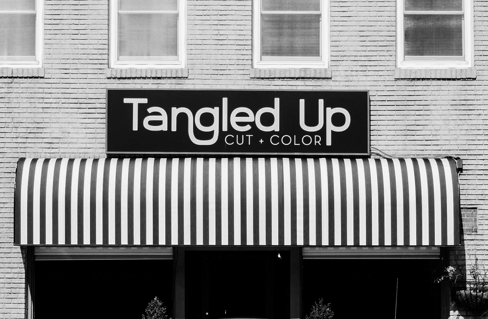 Tangled Up Hair Studio