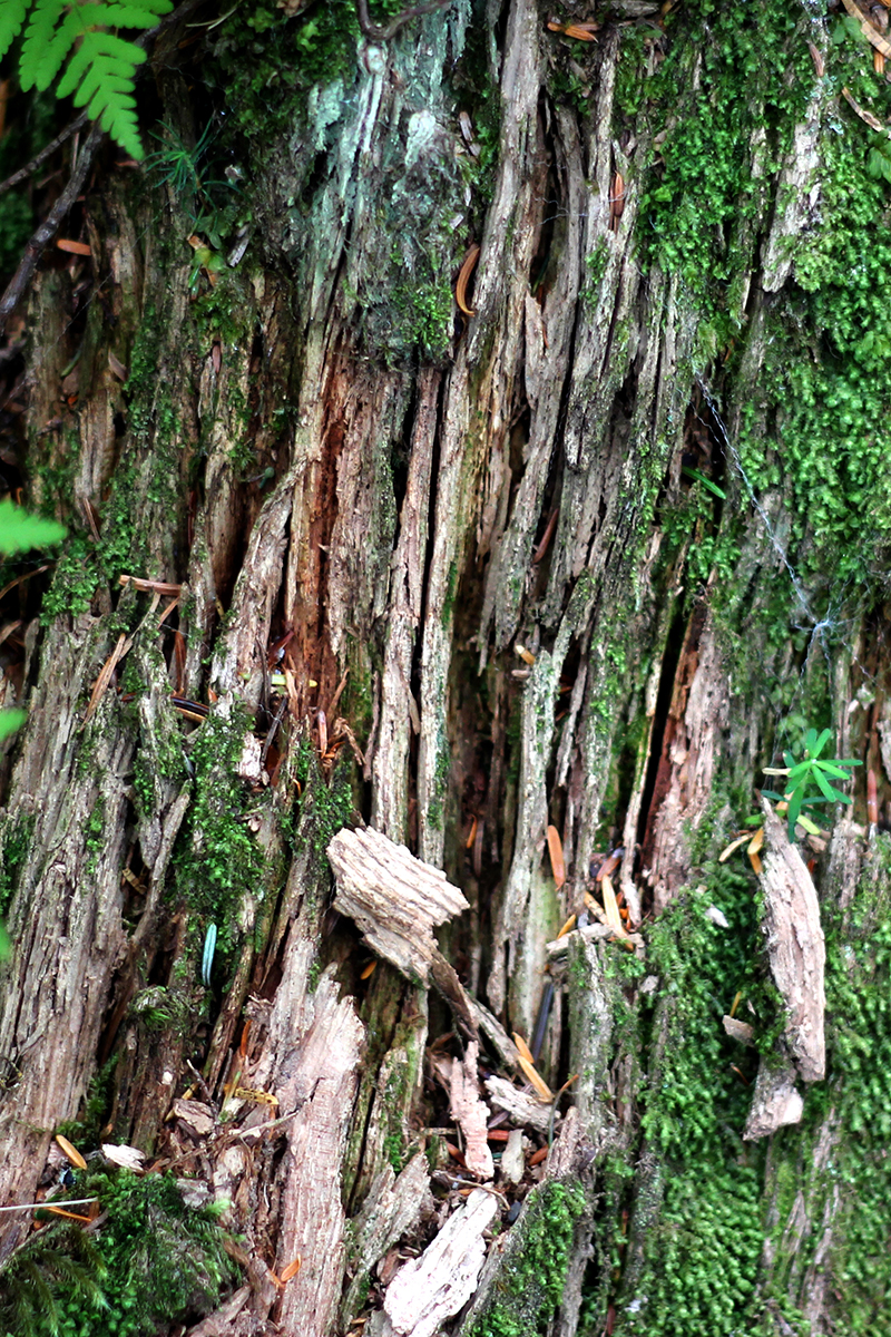 160709w_CA_tree_lines_moss_nirvana_park_SDC.jpg