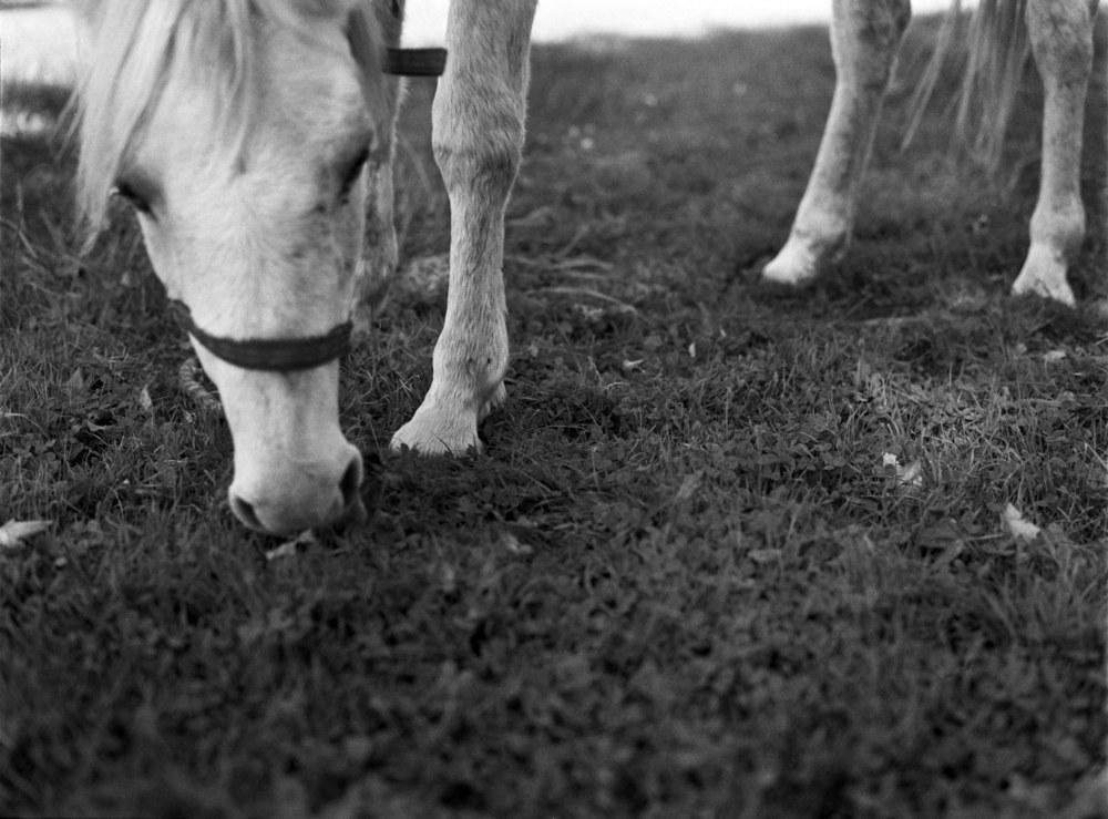 Farm_Annie.jpg