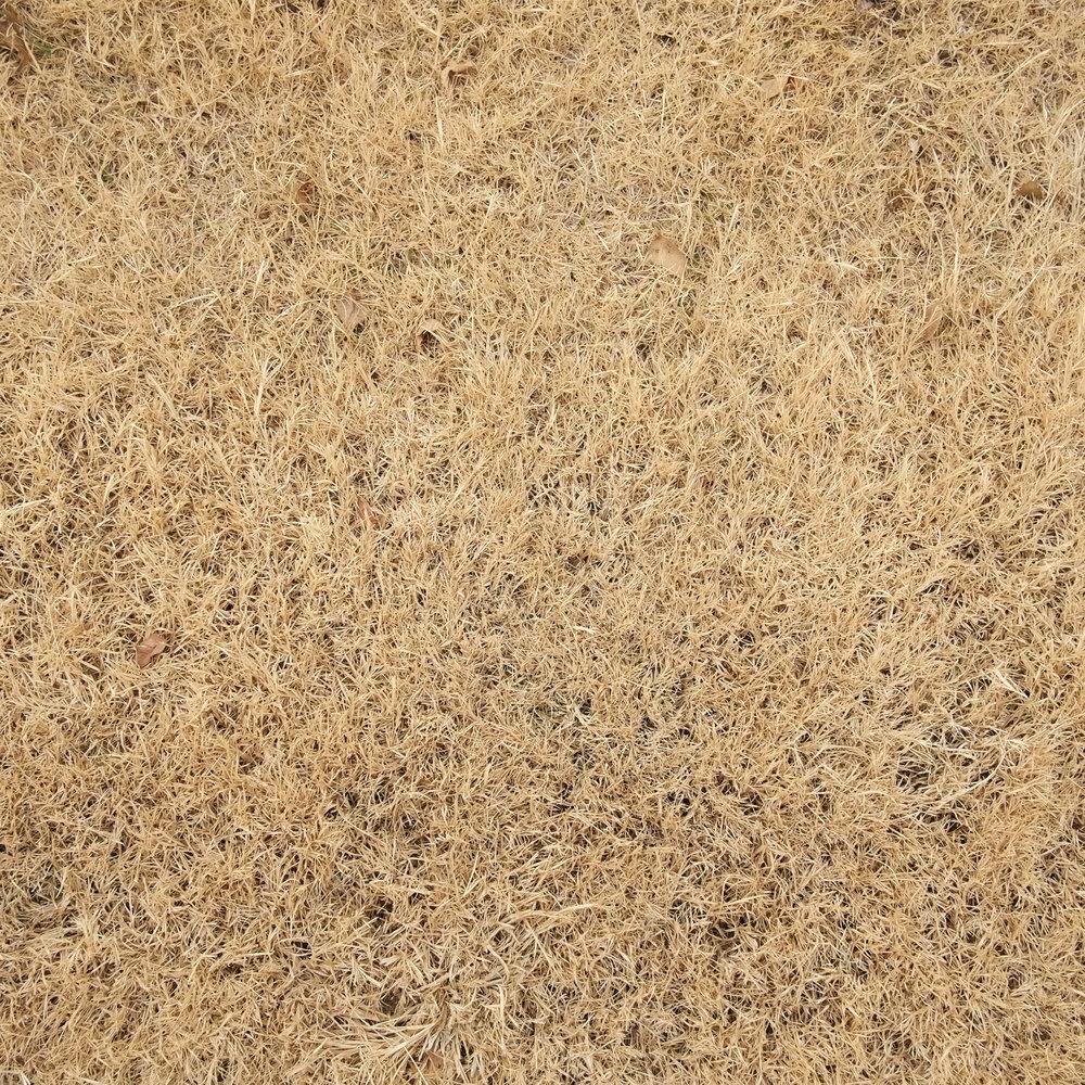 Dry Grass.jpg